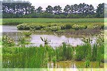 Maryland Wetlands