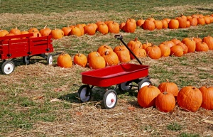 Fall Festivals in Maryland and Northern Virginia